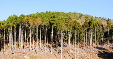 森林由来の環境クレジットサービス